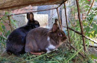 Fatarea la iepuri. Cum sa ai grija de iepuroaica si de pui #Iepuri #Iepuroaica