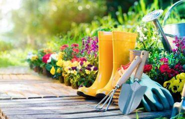 5 sfaturi extrem de utile pentru gradina ta #Gradina #SfaturiGradina