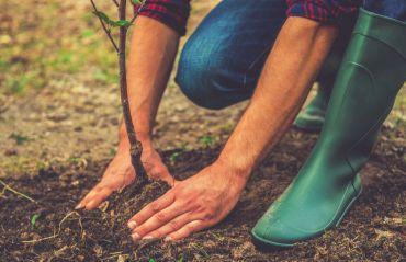 Care este anotimpul indicat pentru replantarea unui copac #ReplantareCopac #Replantare