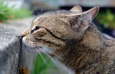 Cum se inlatura mirosul de urina de pisica #MirosUrina #UrinaPisica
