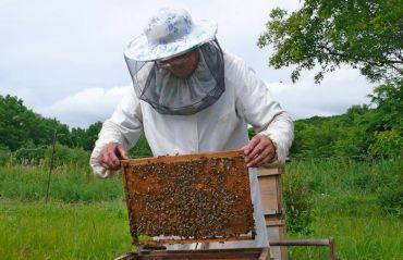 Cum sa dezvolti o afacere. Statul te ajuta, daca devii apicultor #Apicultura #AjutorStat