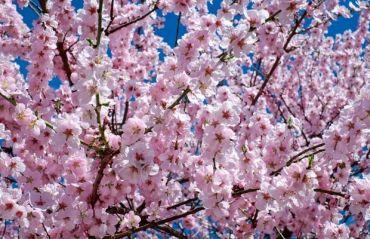 Florii. Traditii si obiceiuri #Florii #DuminicaFloriilor
