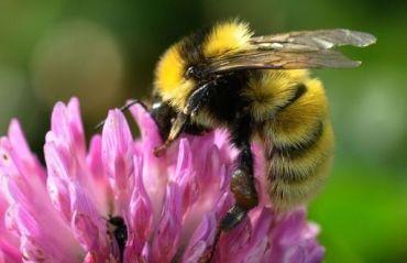 Cum sa salvezi albinele extenuate #Albine #Albina