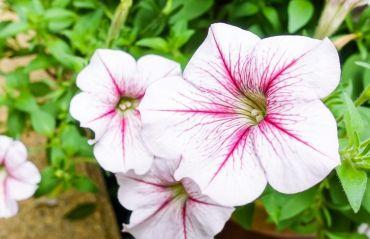 Plante ce resping daunatorii din gradina #Plnate #PlanteAntidaunatori
