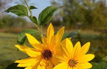 Plante care atrag polenizatorii in gradina ta #Plante #Polenizare