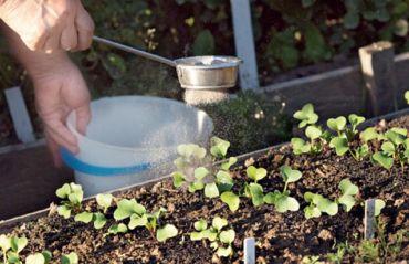 Cum sa fertilizezi plantele cu cenusa #FertilizarePlante #Plante