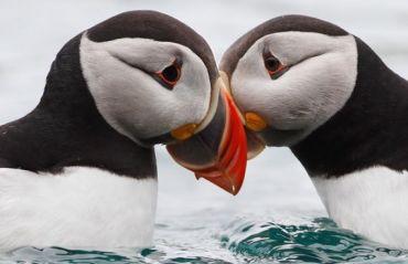 7 animale monogame si comportamentele lor fascinante #AnimaleMonogame #MonogamieAnimale