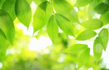 De ce e importanta fotosinteza #Fotosinteza #Flori
