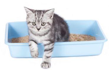 La cat timp se schimba nisipul din litiera #Pisica #PisicaAsternut